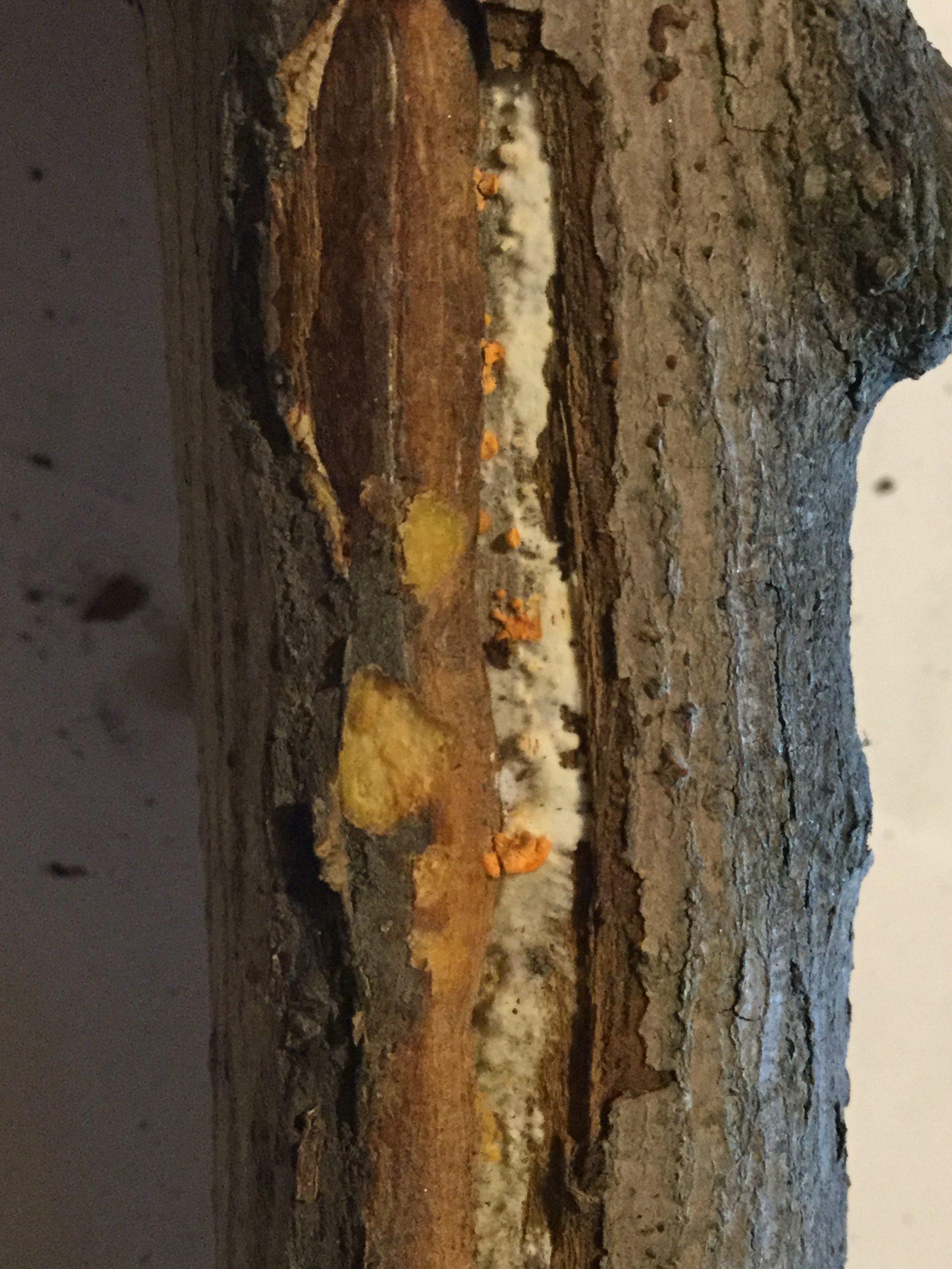 papilláris urothelialis neoplazma patológiájának körvonalai