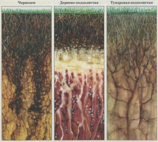 Типы почв (Soil types) Песчаные почвы