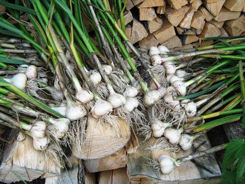 Купить грунт плодородный в выборге