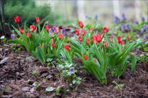 сад для инвалидов