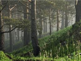 Тольятти-выставка леса