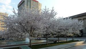 весна в Америке