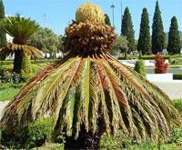 вьетнамские растения ядовиты