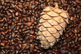 кедровые орехи1