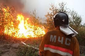 лесные пожары1