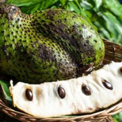 1384270776_guanabana-frukt