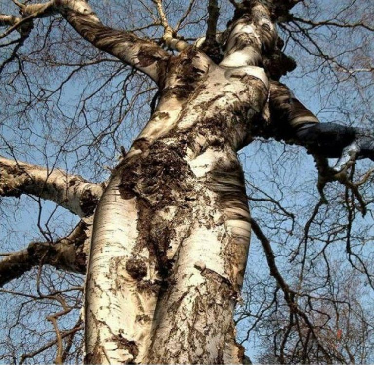 seksi-hozyayka-dikogo-lesa