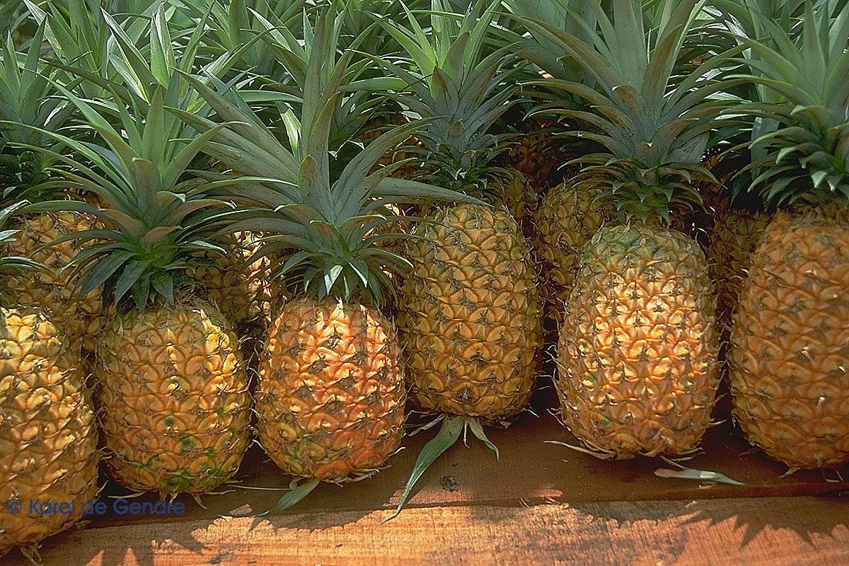 ananas10
