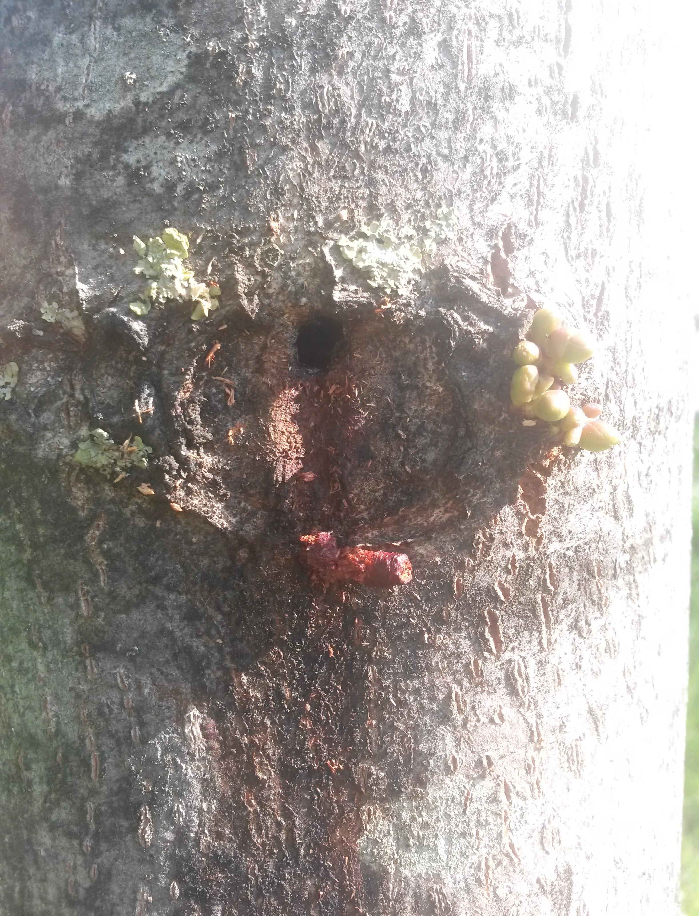drevesnica11