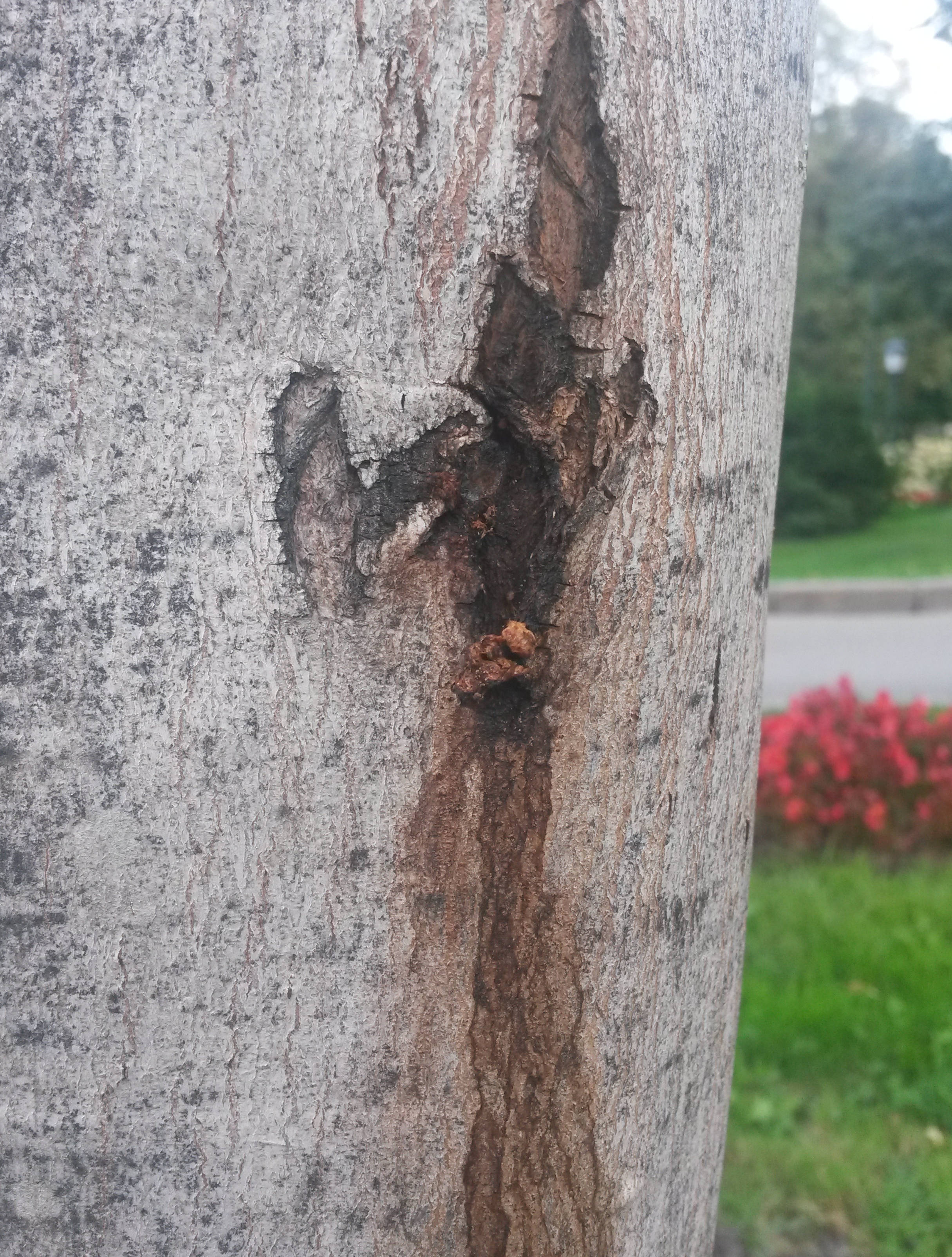 drevesnica4