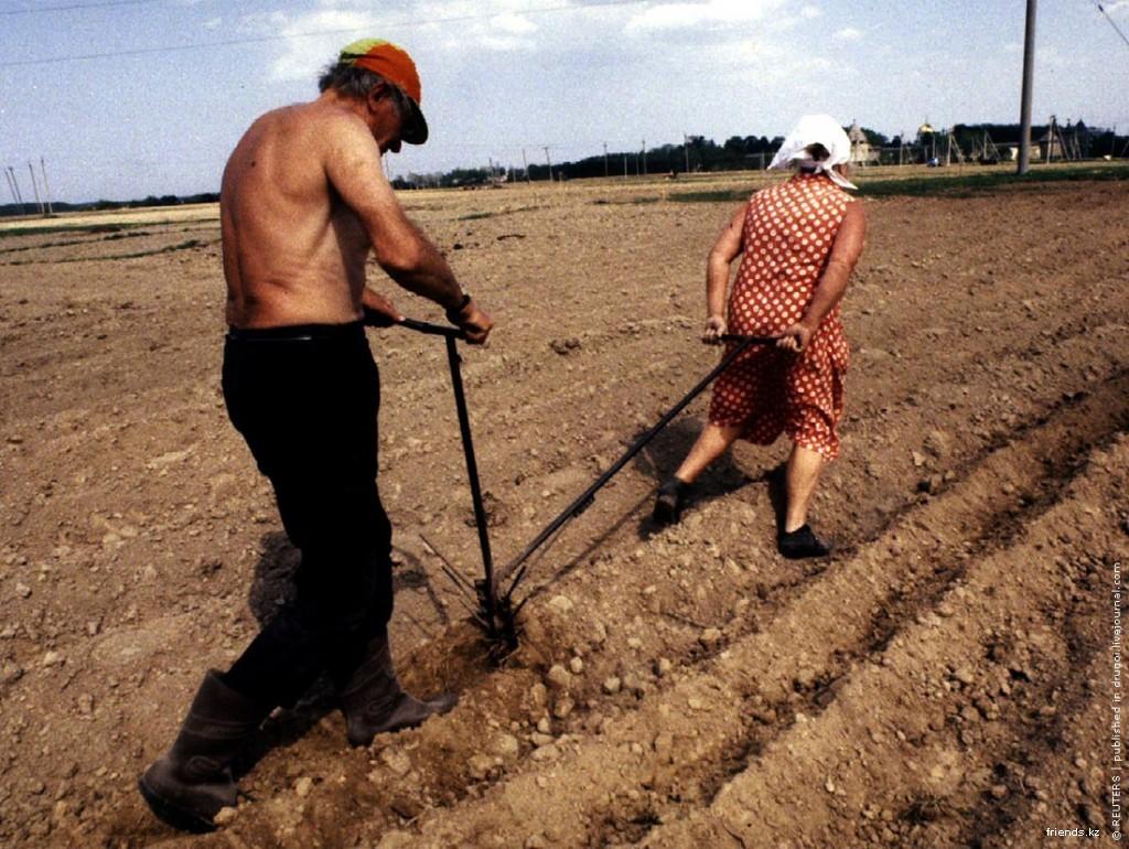 Картинки по запросу разорение сельского хозяйства картинки