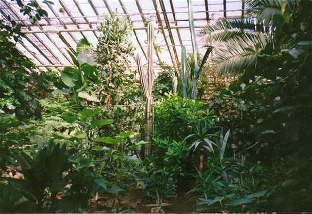 Полярно-альпийский-ботанический-сад