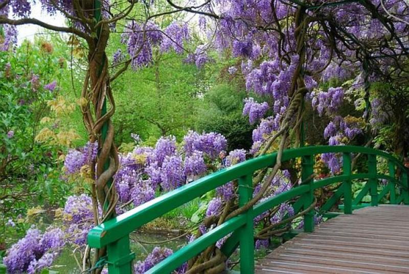 88615609_monets_garden_giverny_standart