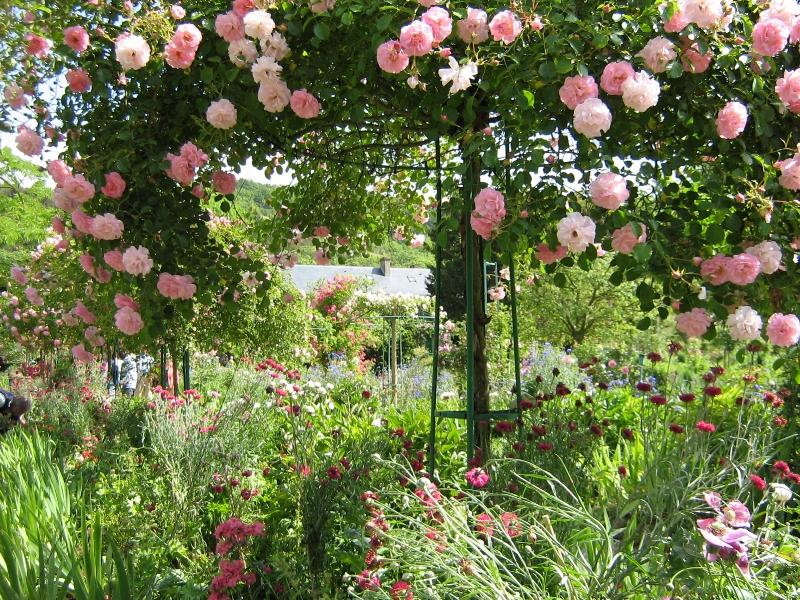 Monet_roses